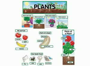 Picture of Plants Display Set