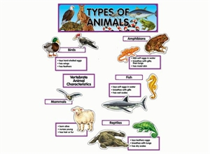 Picture of Types of Animal Display Set
