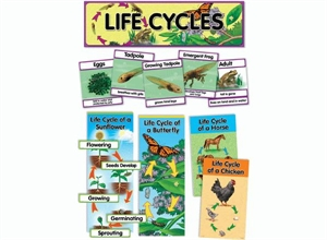 Picture of Life Cycles Display Set