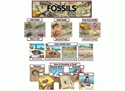 Picture of Fossils Display Set