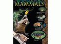 Picture of Mammals Learning Chart