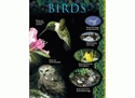 Picture of Birds Learning Chart