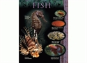 Picture of Fish Learning Chart