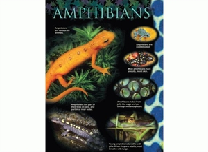 Picture of Amphibians Learning Chart