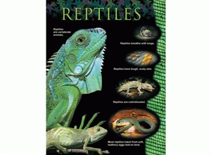 Picture of Reptiles Learning Chart
