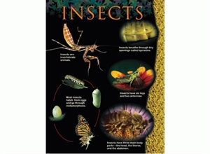Picture of Insects Learning Chart