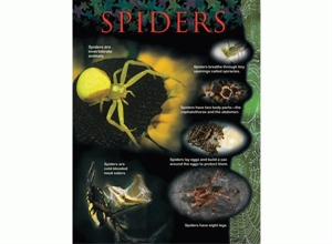 Picture of Spiders Learning Chart