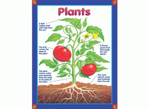 Picture of Plants Learning Chart