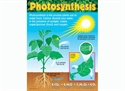 Picture of Photosynthesis Learning Chart