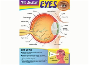 Picture of Eyes Learning Chart