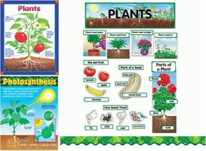 Picture of Plants Topic Pack