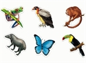 Picture of Rainforest Animal Cut-outs