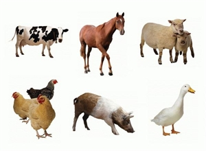 Picture of Farm Animals Cut-outs