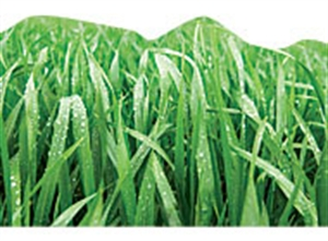 Picture of Grass Discovery Border