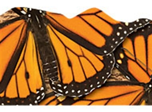 Picture of Monarch Butterflies Discovery Border