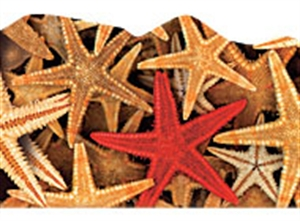 Picture of Starfish Discovery Border