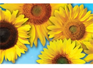 Picture of Sunflowers Photo Border