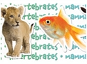 Picture of Animal Classifications Border