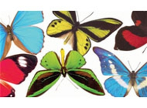 Picture of Butterflies and Moths Photo Border
