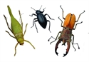 Picture for category Minibeasts