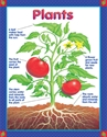Picture for category Plants