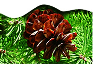 Picture of Pine Boughs Discovery Border