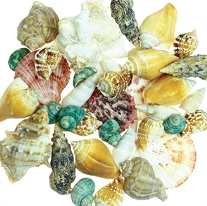 Picture of Bucket of Shells