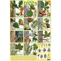 Picture of Familiar Trees Learning Chart
