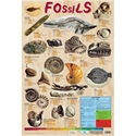 Picture of Fossils Learning Chart