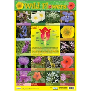 Picture of Wild Flowers Learning Chart