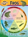 Picture of Life Cycle of a Frog Learning Chart
