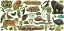 Picture of Rainforest Animals Display Set