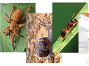 Picture of Nature's Mini-beasts Image Pack