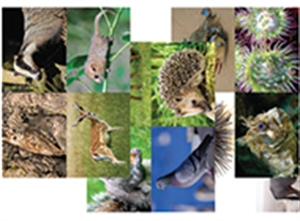 Picture of Animals and Habitats Image Pack