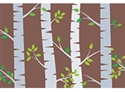 Picture of Birch Trees Border